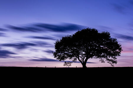 sunsets: Oak tree silhouette with sunset shadow sky clouds