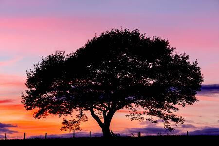 Silhouette d'arbre de chêne avec coucher de soleil ombre des nuages ??du ciel Banque d'images - 28230241