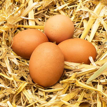group of brown hen  's eggs lie in straw Stock Photo