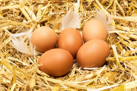 Brown hen eggs lie in straw with white feathers