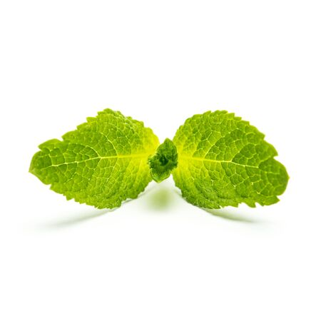 peppermint: fresh peppermint mint leaf isolated on white