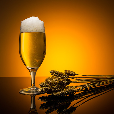beer tulip: glass of beer from german with wheat ears on orange background Stock Photo