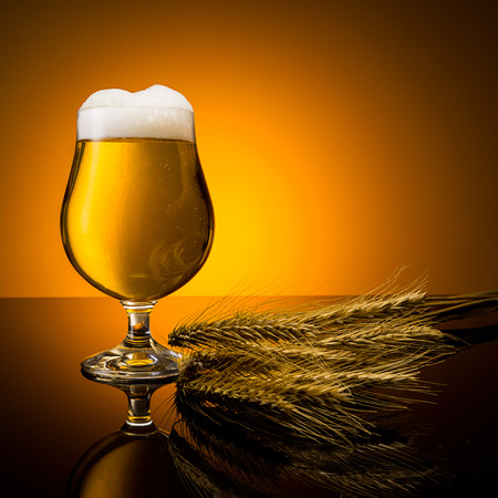 beer tulip: glass of german beer with froth and corn ears Stock Photo