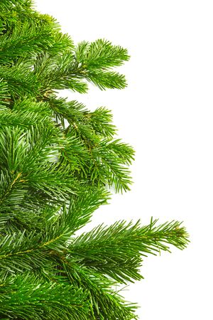 pine tree needles: row of fir branches isolated on white background Stock Photo