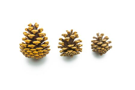 pine three: set of different pine cones isolated on white