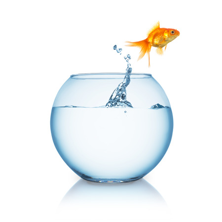 fishbowl: fishbowl with a goldfish that jumps in to liberty on white Stock Photo