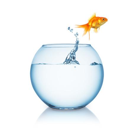Goldfischglas mit einem Goldfisch, der in springt auf Freiheit auf weiß