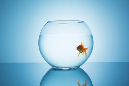 claustrophobia: fishbowl with a lonely goldfish on blue background