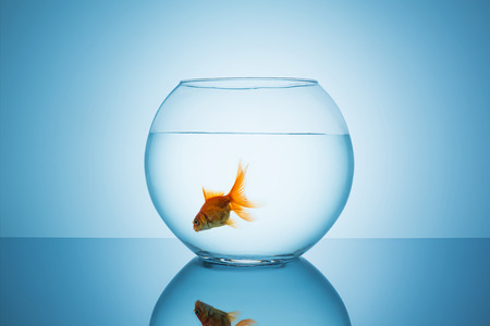 fishbowl glass with a lonely goldfish on blue background
