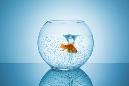 twister in a fishbowl with a frightened goldfish on blue background photo
