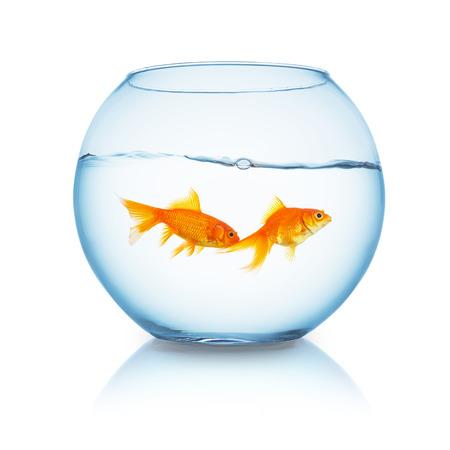 fishbowl: fishbowl with two goldfish freinds on white background