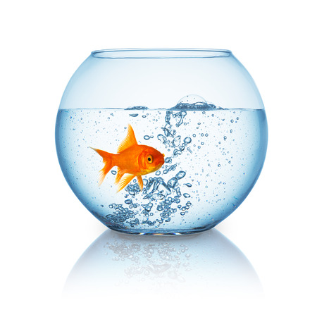 fishbowl: fishbowl with hot water and a goldfish that is frightened on white background