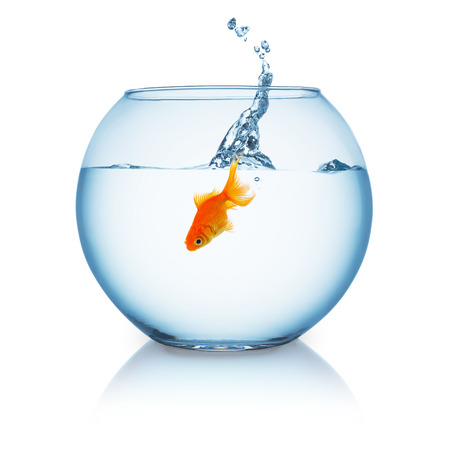 claustrophobia: fishbowl with a jumping in goldfish impact isolated on white Stock Photo