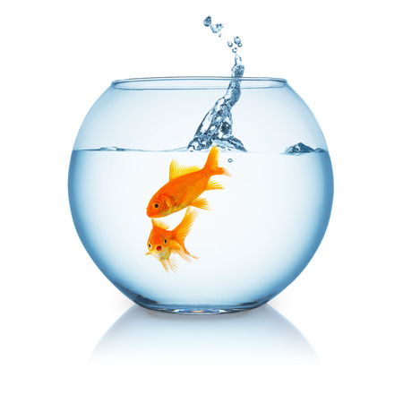 goldfishes: fishbowl with a two goldfishes and a jumping splash on white background