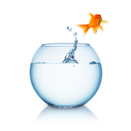 goldfish jump: fishbowl with a lonely goldfish that jumps in to liberty isolated on white background Stock Photo