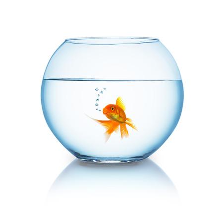 fishbowl: fishbowl with a breathing goldfish isolated on white background