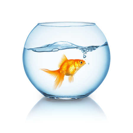 fishbowl with a curious looking goldfish and wavy water surface on white background