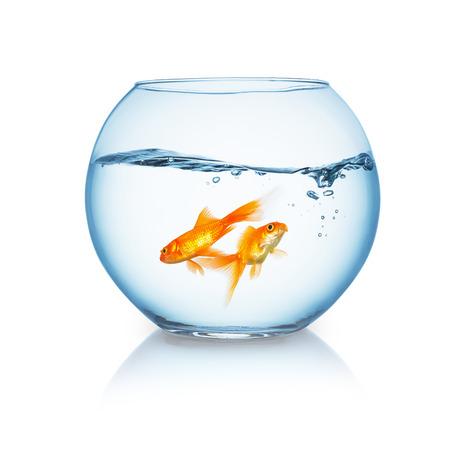 Goldfischglas mit ein paar Goldfische isoliert auf weißem