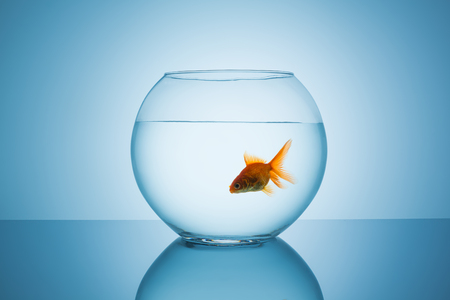 fishbowl: fishbowl glass with a goldfish on blue background