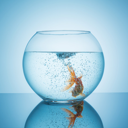 fishbowl: fishbowl with bubbels from a swirl with a frightened goldfish