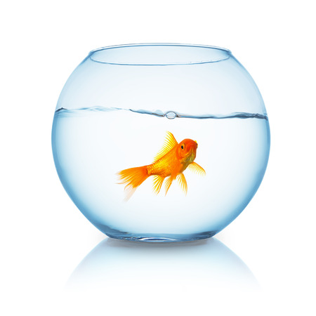 glass containers: lonely goldfish in a fish bowl isolated on white Stock Photo