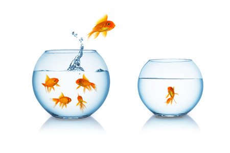 goldfish jump: goldfish jumps in to a fishbowl isolated on white Stock Photo