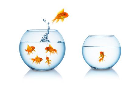 pez dorado: goldfish salta a una pecera aislado en blanco