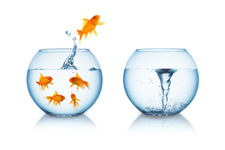 goldfish jump: depressive goldfish jumps in to a fishbowl with a twister isolated on white