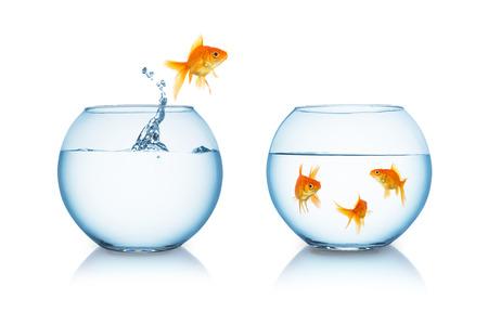Gold-Fisch springt aus einem Goldfischglas, um seine Freunde, isoliert auf weiss
