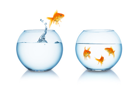gold fish jumps out of a fishbowl to his friends isolated on white