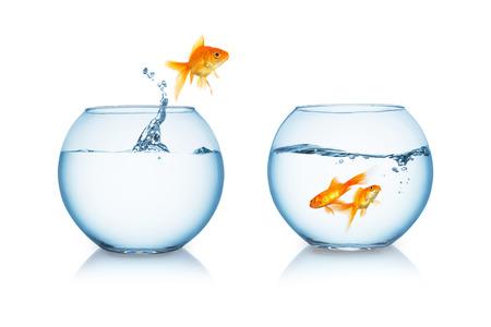 vissenkom met een goudvis springen op wit wordt geïsoleerd Stockfoto