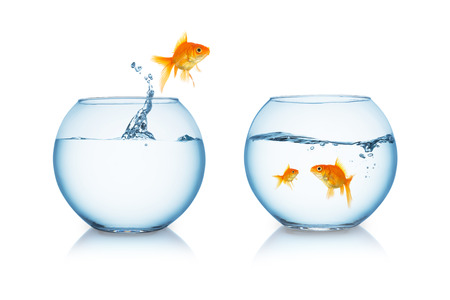 goldfish jumps out of a fishbowl to his family isolated on white background