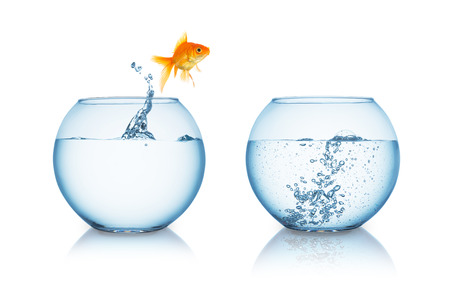 gold fish jumps in to a fishbowl with hot water isolated on white Standard-Bild
