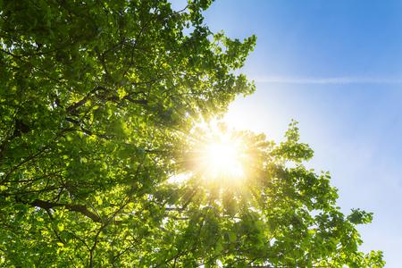 iluminado a contraluz: sol brillando a través de copas de los árboles bellamente Foto de archivo