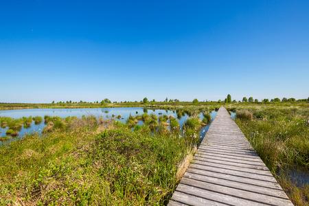 turba: lago pantano con pista de madera, en primavera en las Fagnes en Bélgica