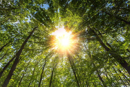 treetop: Rays of sunlight falling through the forest Stock Photo
