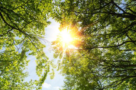 Spring sun shining through the treetop with blue sky