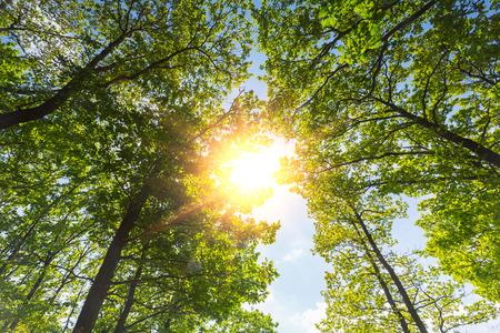 Warm Spring sun shining through the treetop