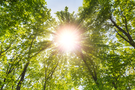 Warm spring sun shines through explosive treetop