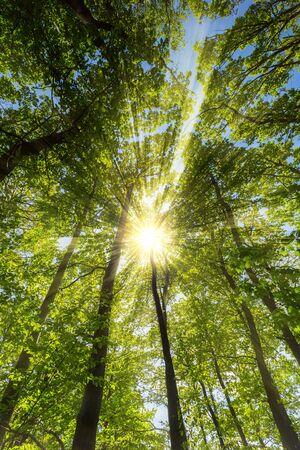 warmly: sun shining warmly through a forest in springtime Stock Photo