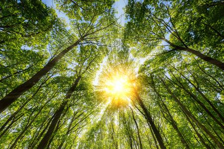 Солнце светит через взрывного верхушки дерева Фото со стока