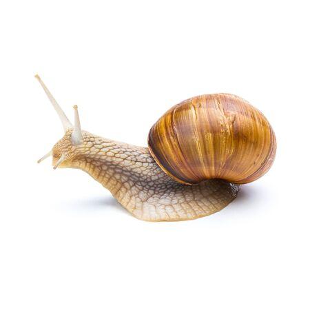 CARACOL: Gran jard�n marr�n caracol Foto de archivo