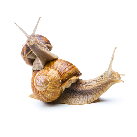 piggyback: Two snails