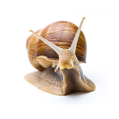 snail Zdjęcie Seryjne