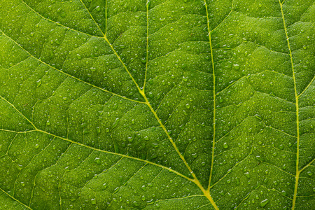 branched: leaf with drops of rain as a background Texture Stock Photo