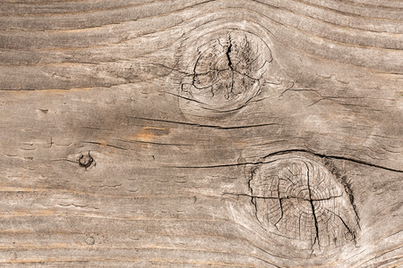 hardwood: Hardwood background texture