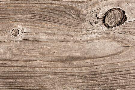 roble arbol: madera vieja trama de fondo textura