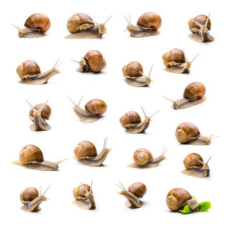 caracol: Conjunto de diferentes caracoles sobre fondo blanco como un collage