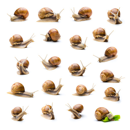 Set of different snails on white background as a collage