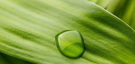 droplets: Green leaf with a dew drop Stock Photo